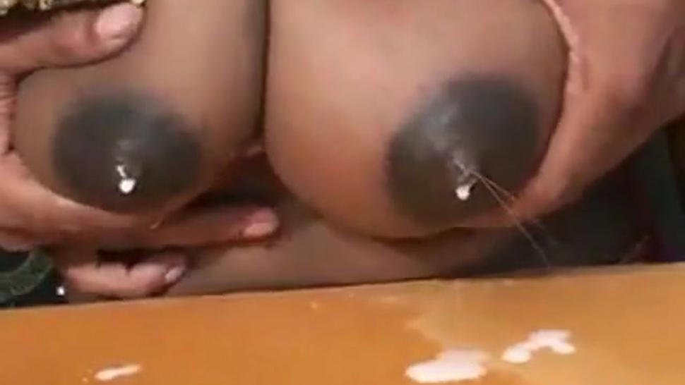 Indian Milk Tits