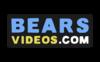Bears Videos